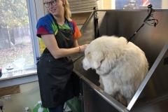 Greensboro-North-Carolina-dog-grooming