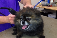 pet grooming Greensboro