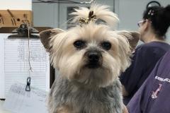 dog-grooming-Greensboro-NC