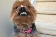 dog-grooming-Greensboro-North-Carolina