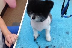 pet grooming Greensboro