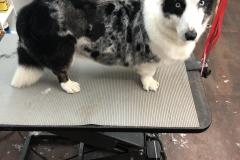 pet-grooming-Greensboro-NC
